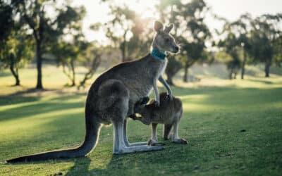 4 parcs pour se balader à Sydney