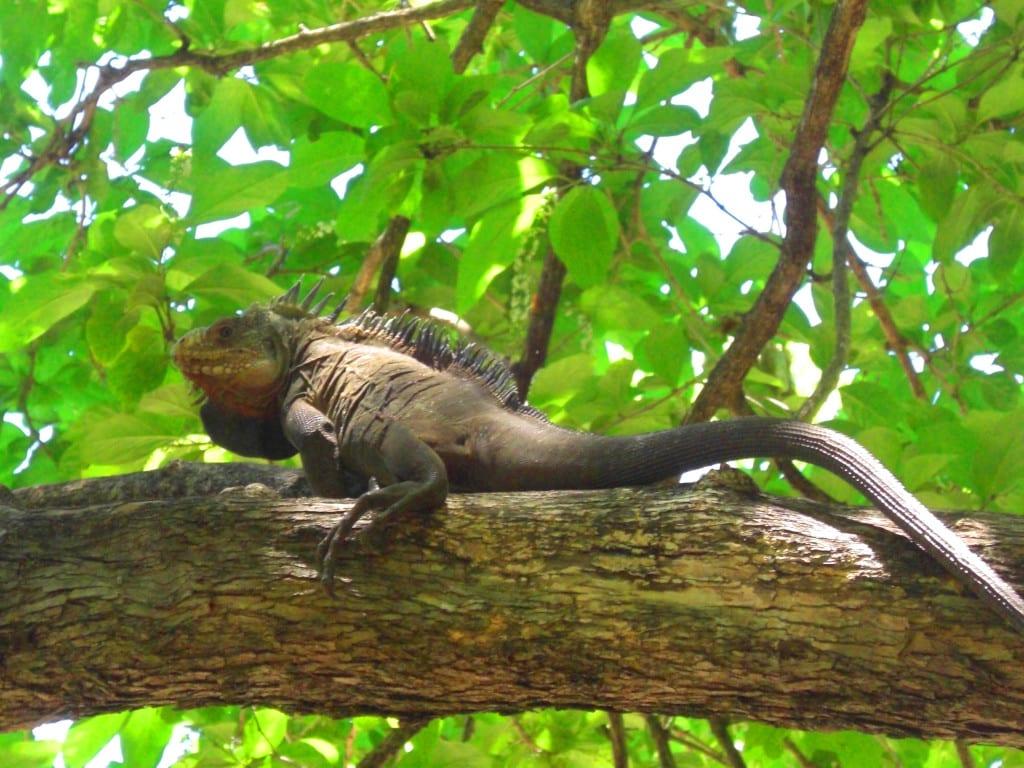 Voyage en Martinique : voir la faune et la flore de la réserve naturelle de La Caravelle