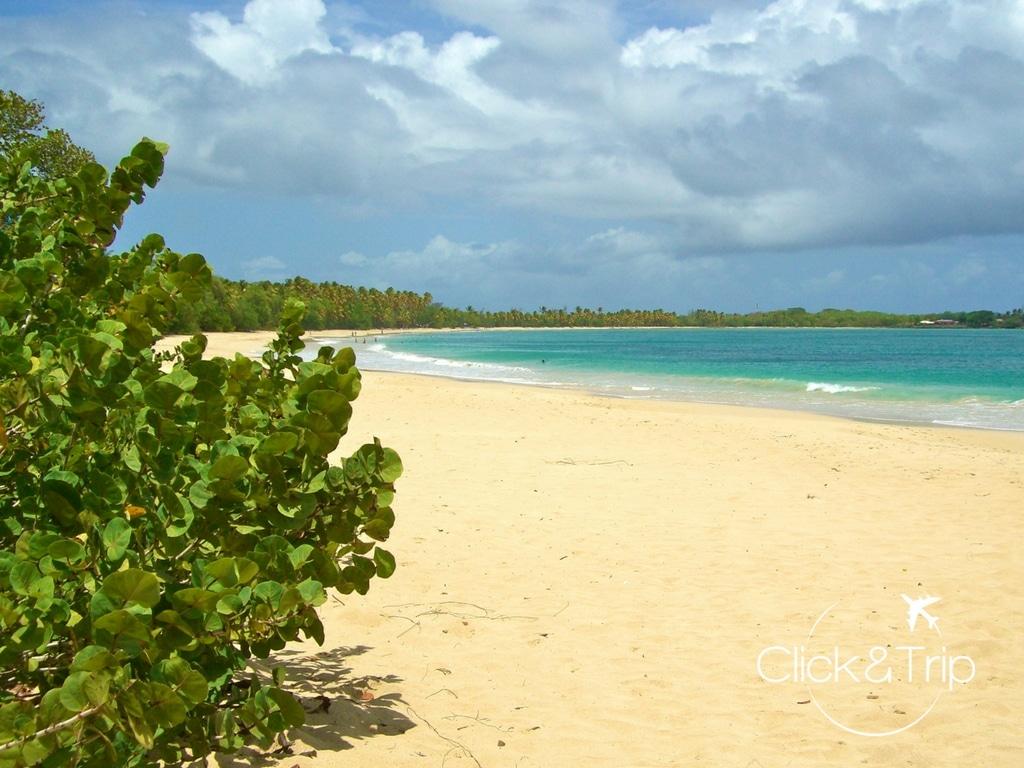 plage des salines en Martinique
