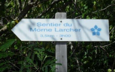 Partez en randonnée sur le sentier du Morne Larcher !