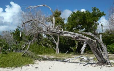 Ne manquez pas la Savane des Pétrifications et la plage des Salines