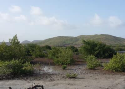 Savane des pétrifications en Martinique