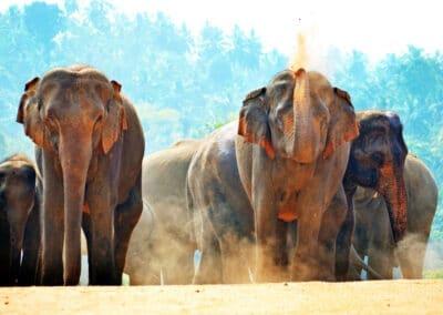 Voyager au Sri Lanka (Ceylan) en Asie