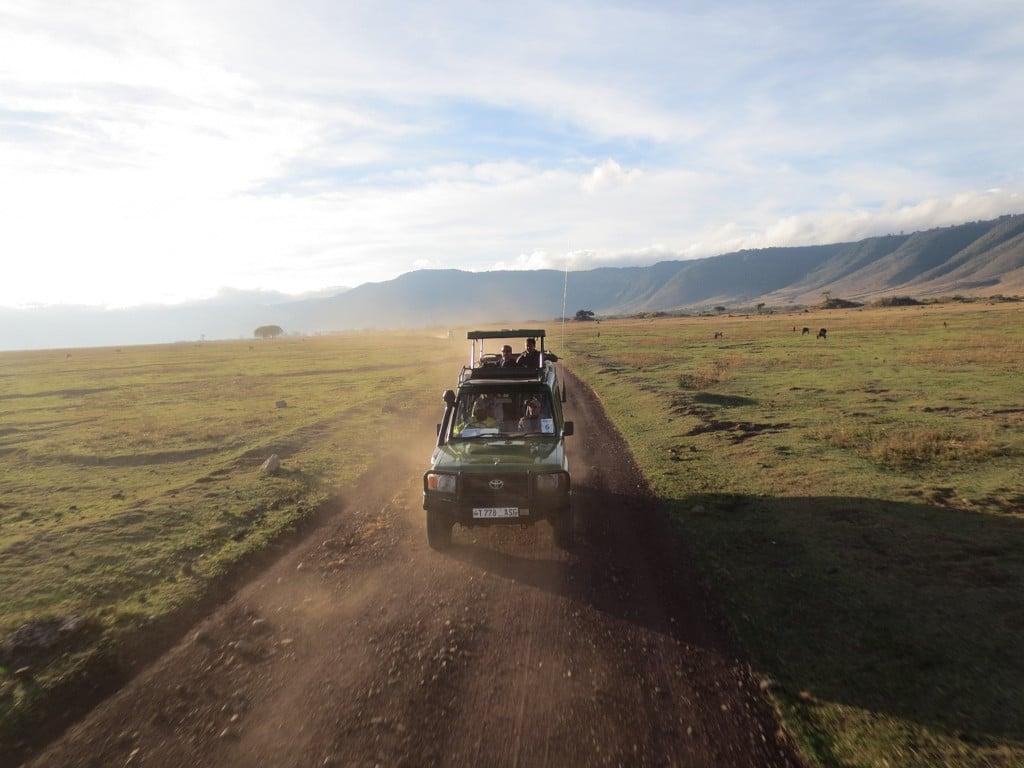 Safari en Tanzanie (Afrique)